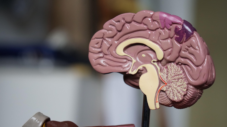dr. Ken Hayworth The Future of Brains
