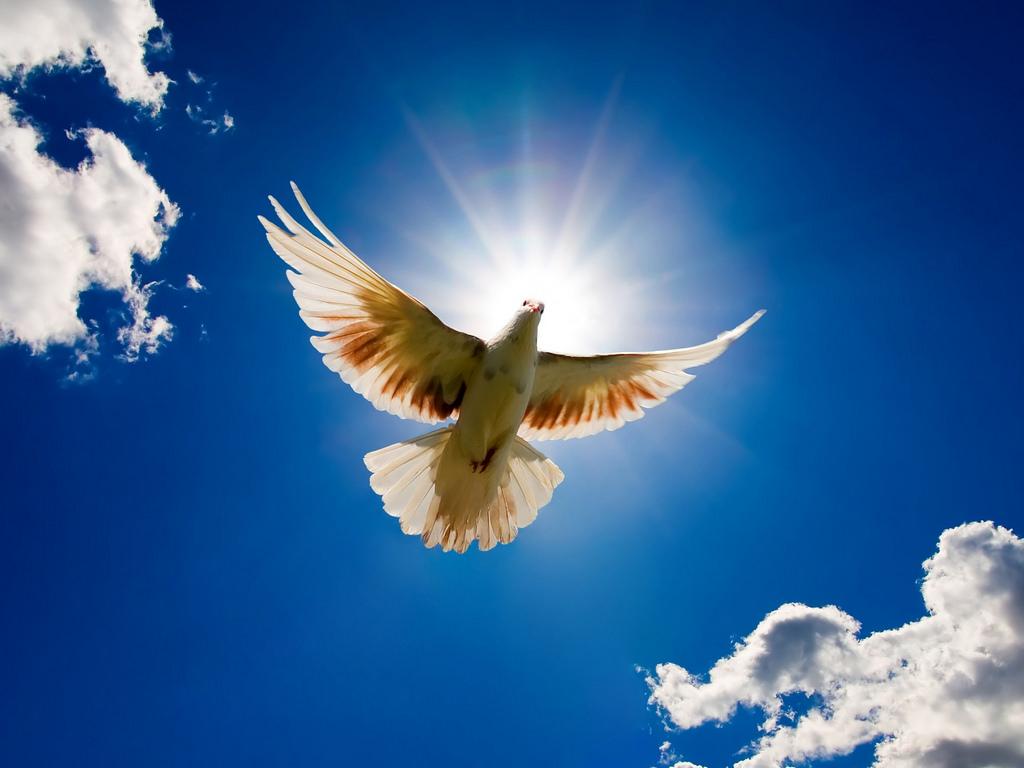 bring world peace