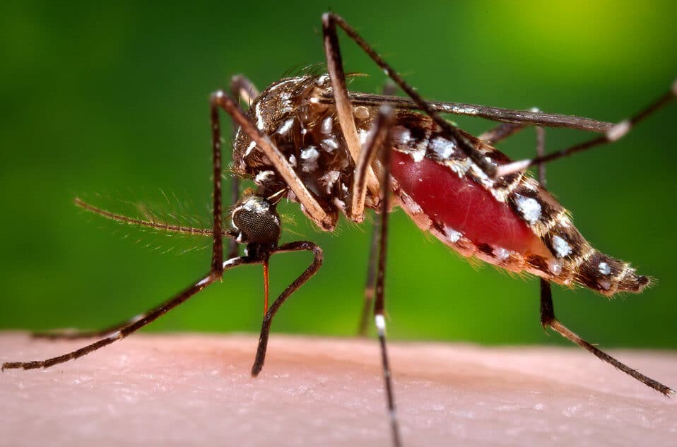 Future Trends: Smart Mosquitos, Microscopes, and Blood Cells